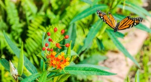 monarch-328620_1280